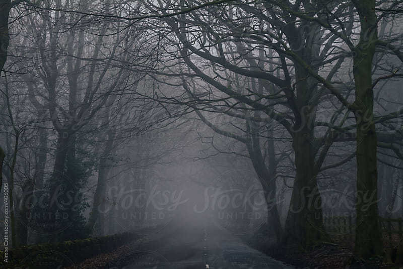 Foggy Woodland Road by Aimee Catt for Stocksy United
