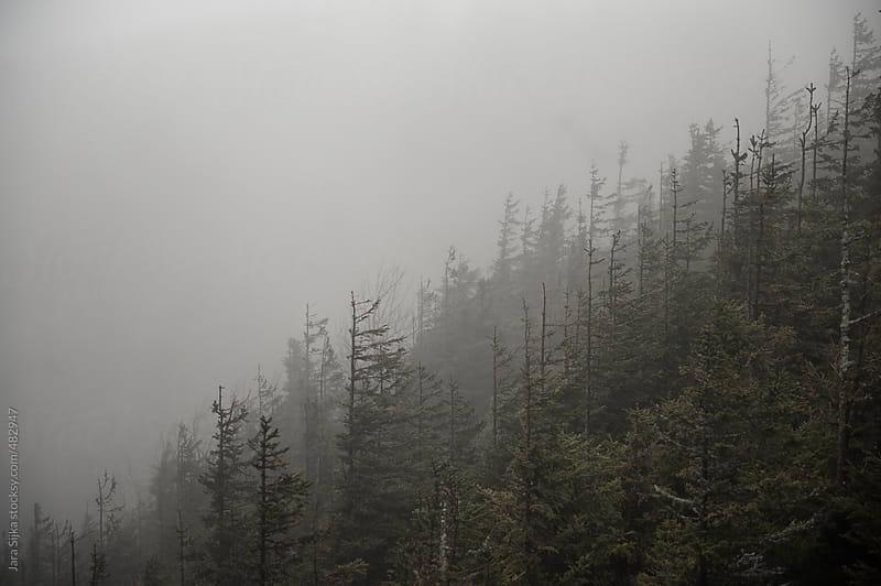 Foggy forest by Jara Sijka for Stocksy United