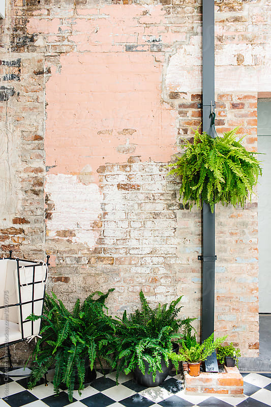 Paint chipped brick textured wall with green plants by Kristen Curette Hines for Stocksy United