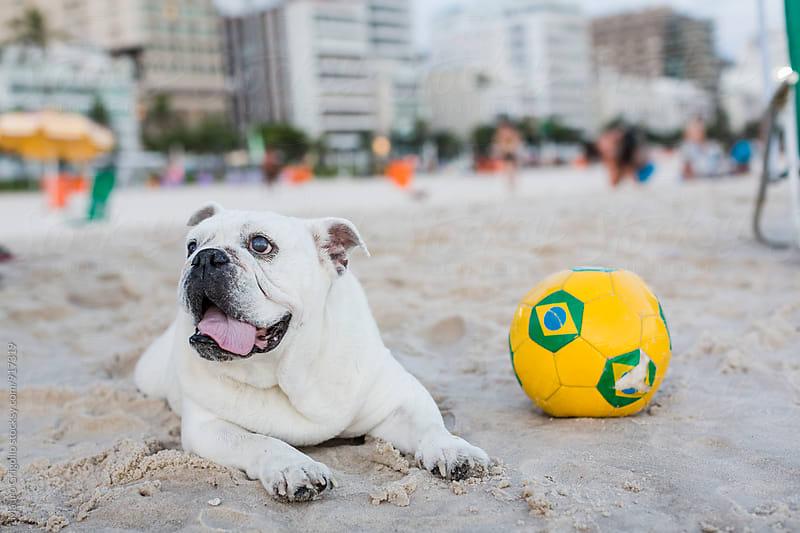 Cute dog on a Brazilian beach by Mauro Grigollo for Stocksy United