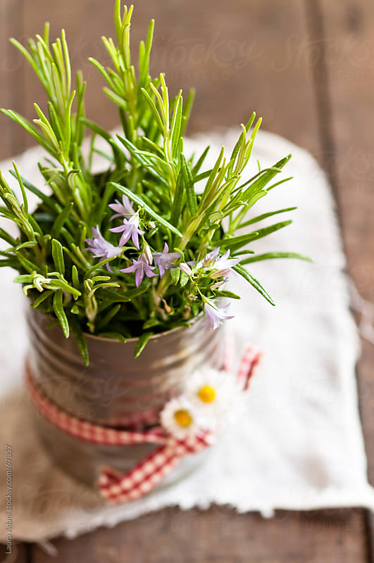sprigs of rosemary and flower in a tin can by Laura Adani for Stocksy United