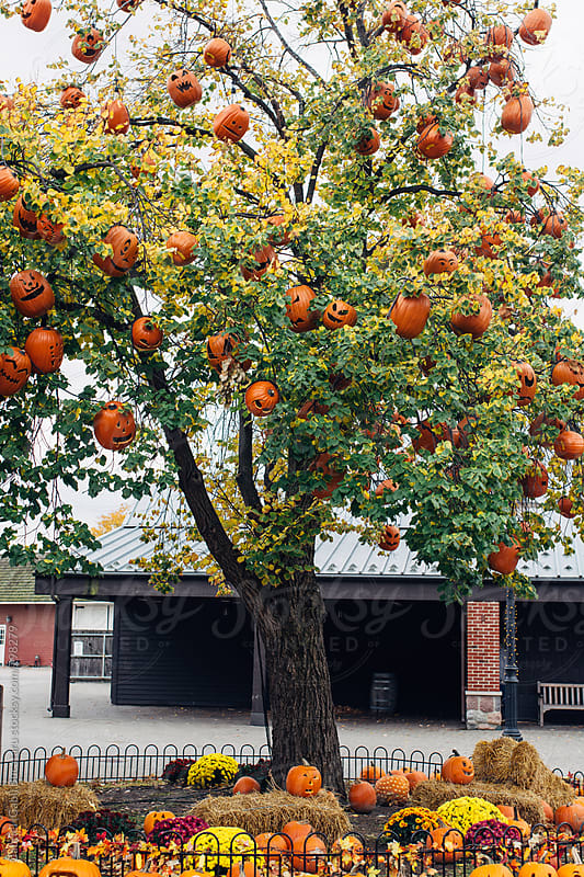 Tree decorated with pumpkins by Gabriel (Gabi) Bucataru for Stocksy United