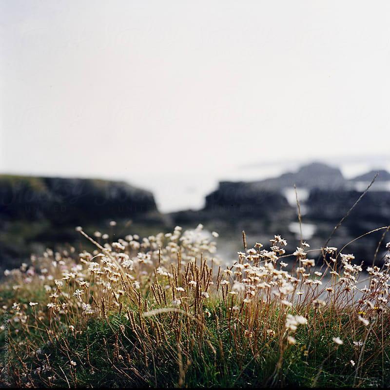 Wild flowers on the coast by Léa Jones for Stocksy United