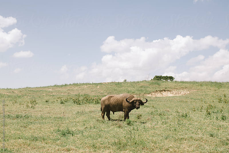 Kenyan Wildlife by Beth Johnston for Stocksy United