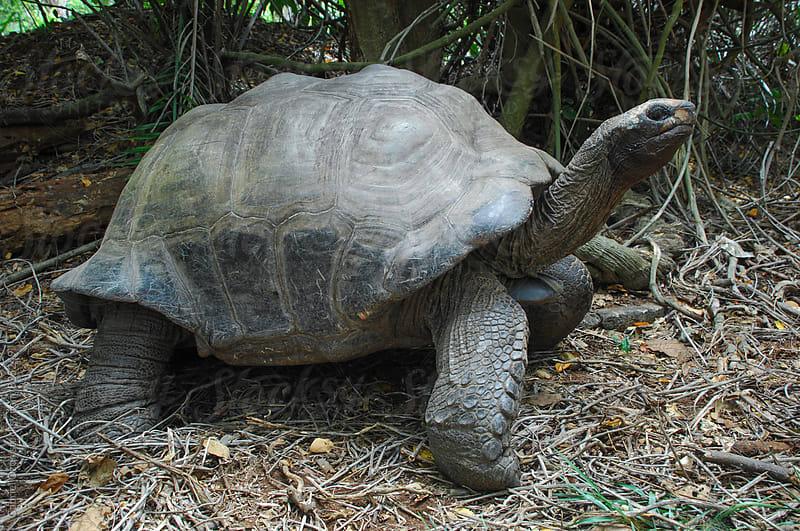 Turtle by Gabriel Ozon for Stocksy United