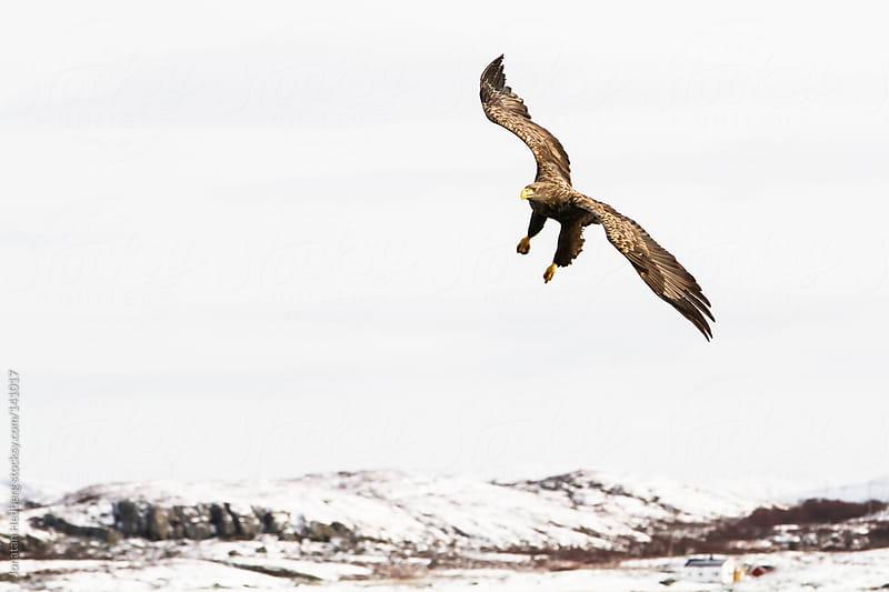 Flying by Jonatan Hedberg for Stocksy United