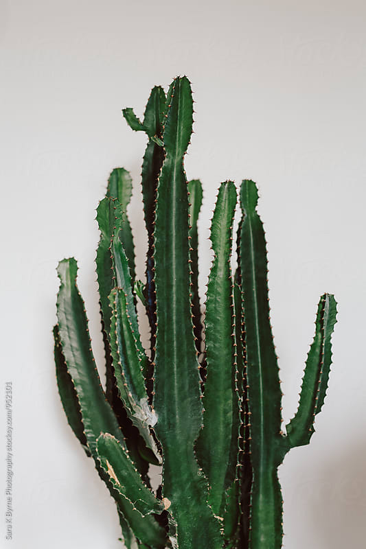 House Cactus by Sara K Byrne Photography for Stocksy United
