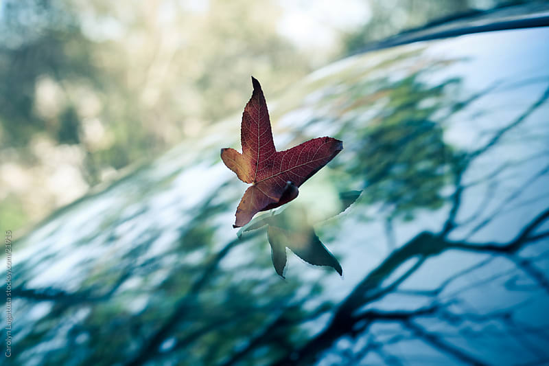 Fall leaf on a windshield with a reflection of the tree above it by Carolyn Lagattuta for Stocksy United