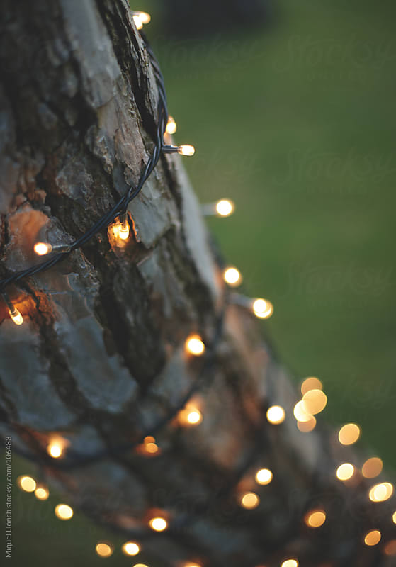 Christmas lights on a tree by Miquel Llonch for Stocksy United