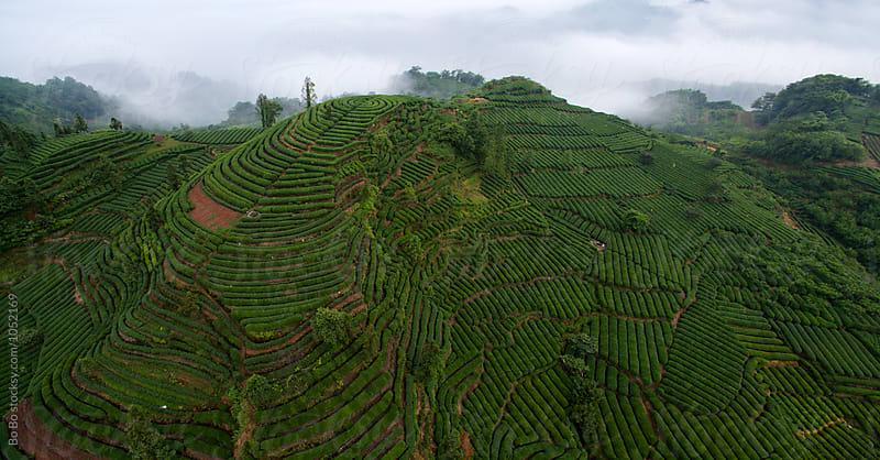 Tea Terraces in the mountain by Bo Bo for Stocksy United