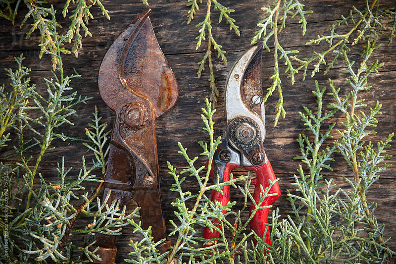 Gardening pruners by Jon Rodriguez for Stocksy United
