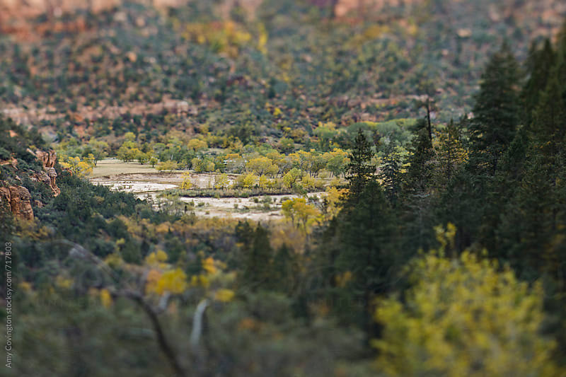 Tilt shift view of the valley at Zion National Park by Amy Covington for Stocksy United