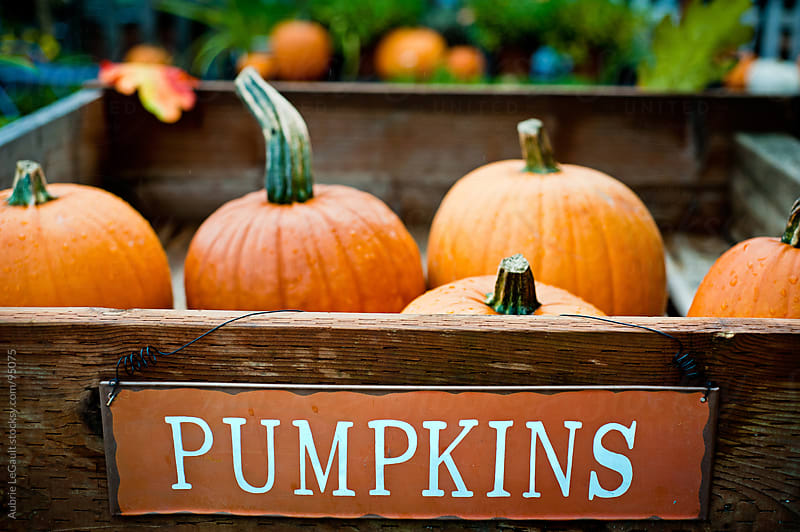 Crate of Pumpkins by Aubrie LeGault for Stocksy United