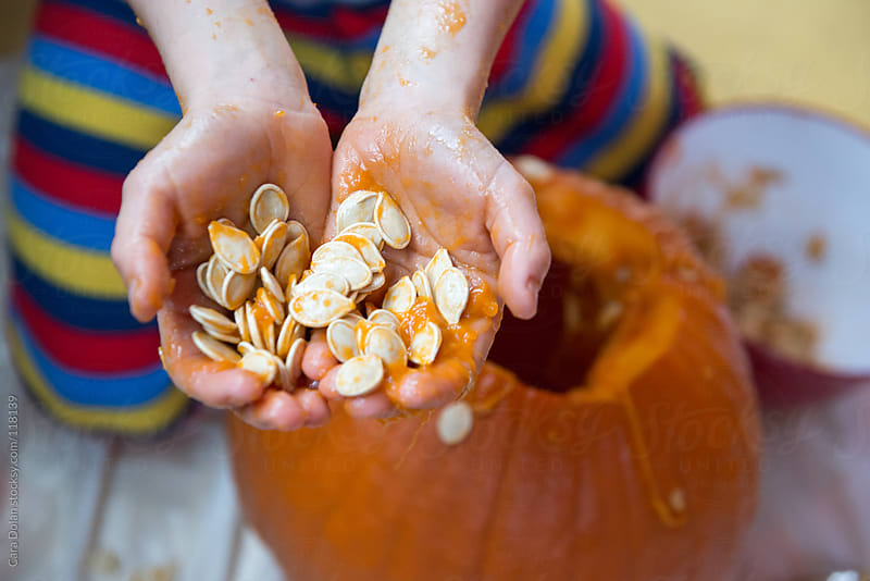 Child's hands hold the slimy insides of a pumpkin being carved into a jack-o-lantern for Halloween by Cara Dolan for Stocksy United
