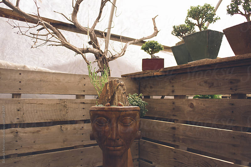 Planter with Face and Bonsai Trees by Briana Morrison for Stocksy United
