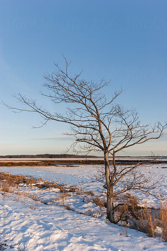 Single tree in a field of snow at sunset by Adam Nixon for Stocksy United