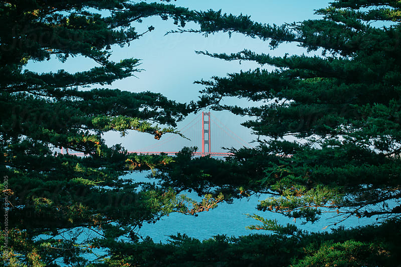 Golden Gate Bridge Spied Through Tree Branches At Eagle's Point by Luke Mattson for Stocksy United