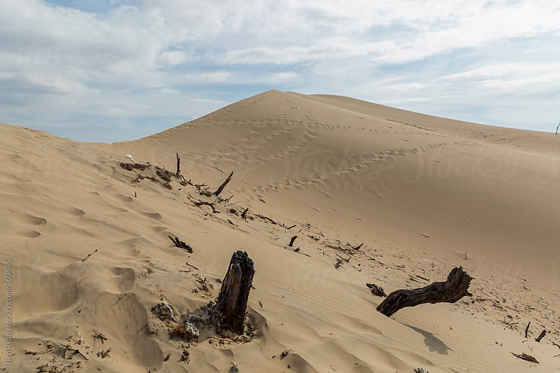 Sand dunes littered with footprints and dead vegetation by Ben Ryan for Stocksy United