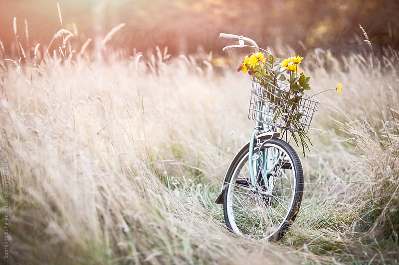 Bicycle and flowers on the field by Suprijono Suharjoto for Stocksy United