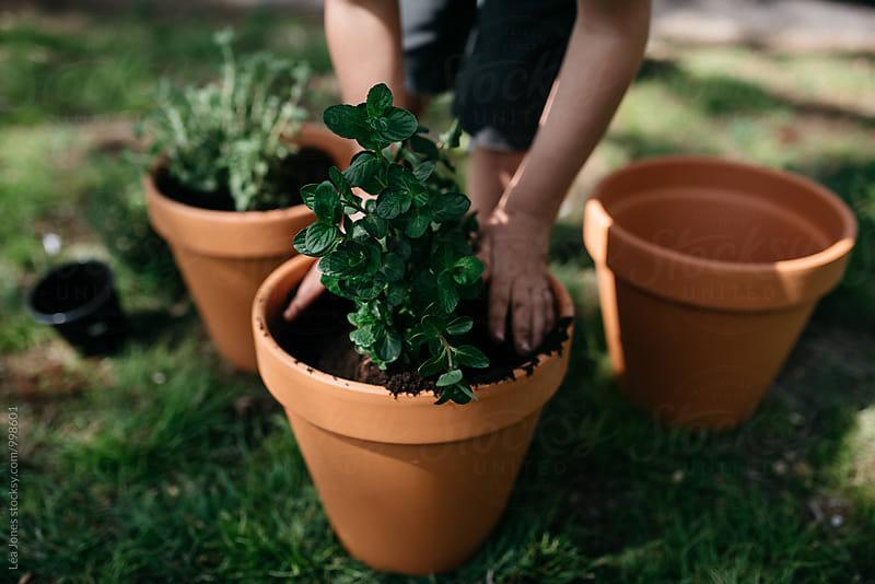 little child planting herbs in pots by Léa Jones for Stocksy United