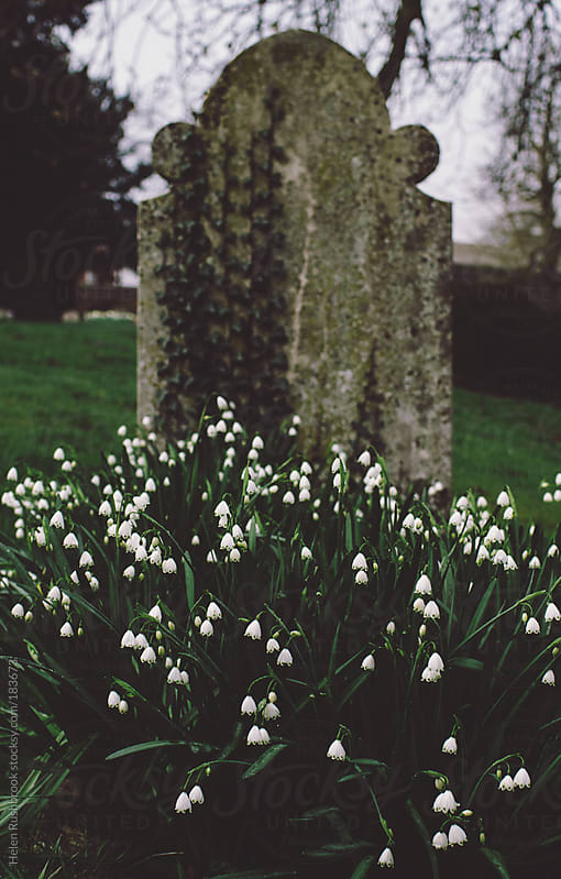 Snowdrops in front of a gravestone by Helen Rushbrook for Stocksy United