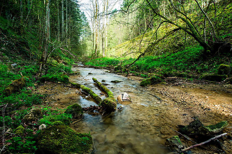 Small creek inside forest in spring at Linn by Peter Wey for Stocksy United
