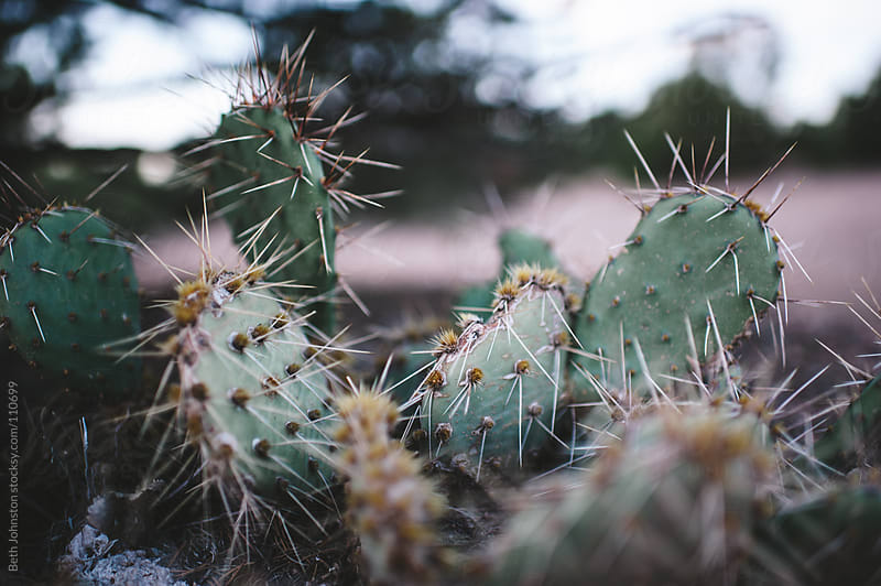 Prickly by Beth Grimes for Stocksy United