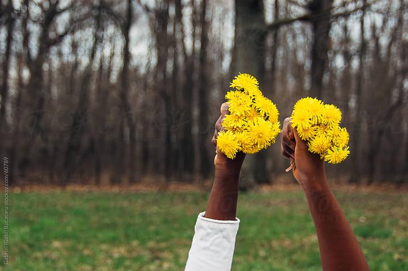 Black girl's hands holding dandelions bouquets by Gabriel (Gabi) Bucataru for Stocksy United