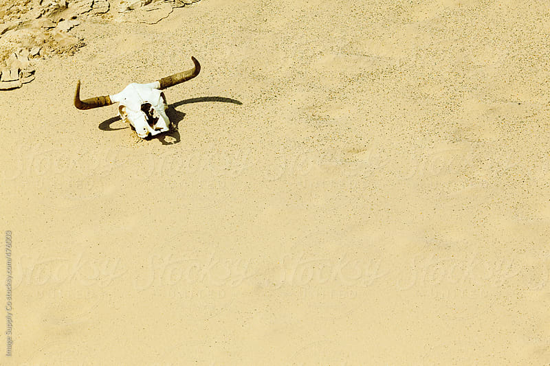 Bull skull on sand dune by Image Supply Co for Stocksy United