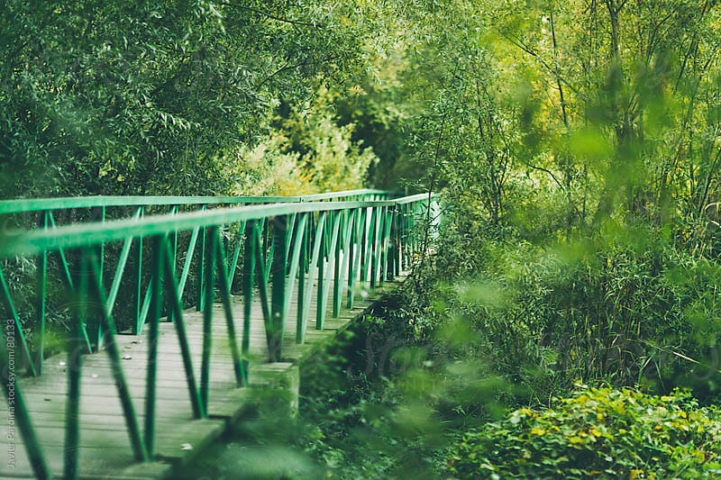 A metal green bridge in the woods by Javier Pardina for Stocksy United