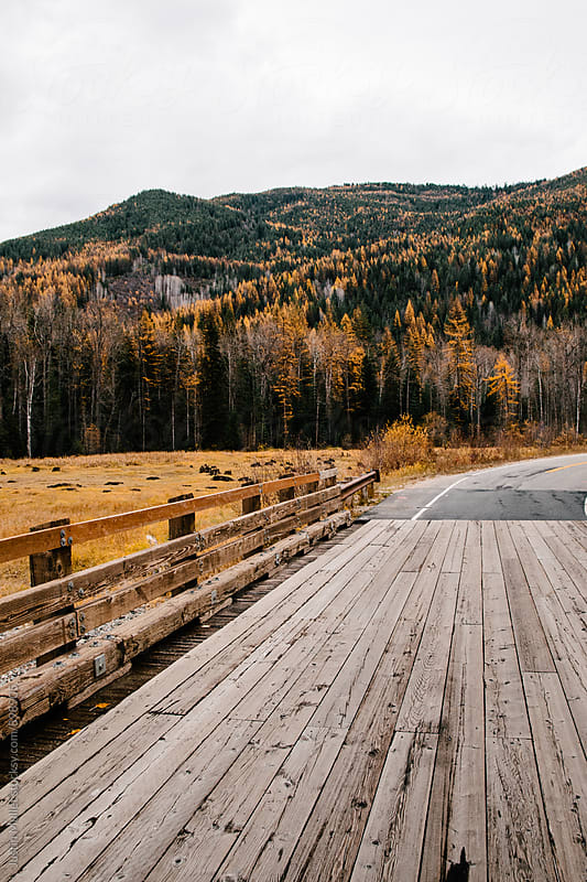 Wooden bridge in rural Washington by Justin Mullet for Stocksy United