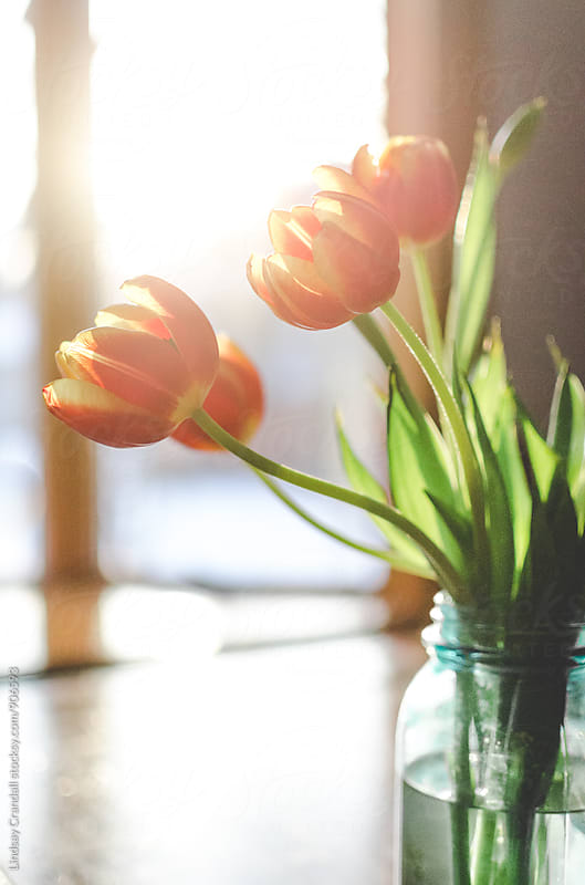 Tulips in morning light on a table by Lindsay Crandall for Stocksy United