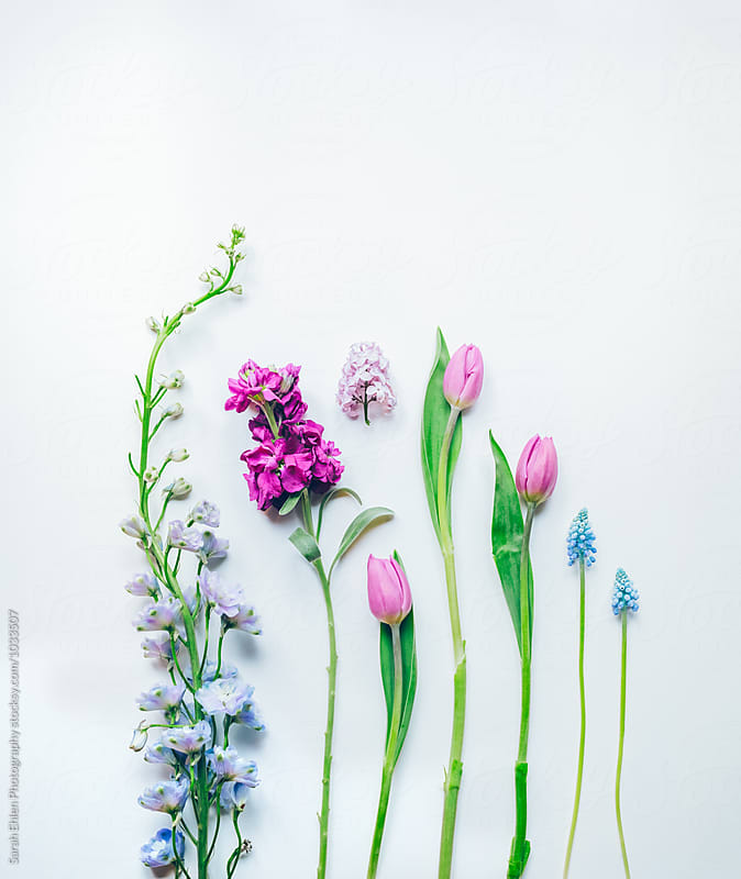 Spring flowers arranged on a white background by Sarah Ehlen Photography for Stocksy United