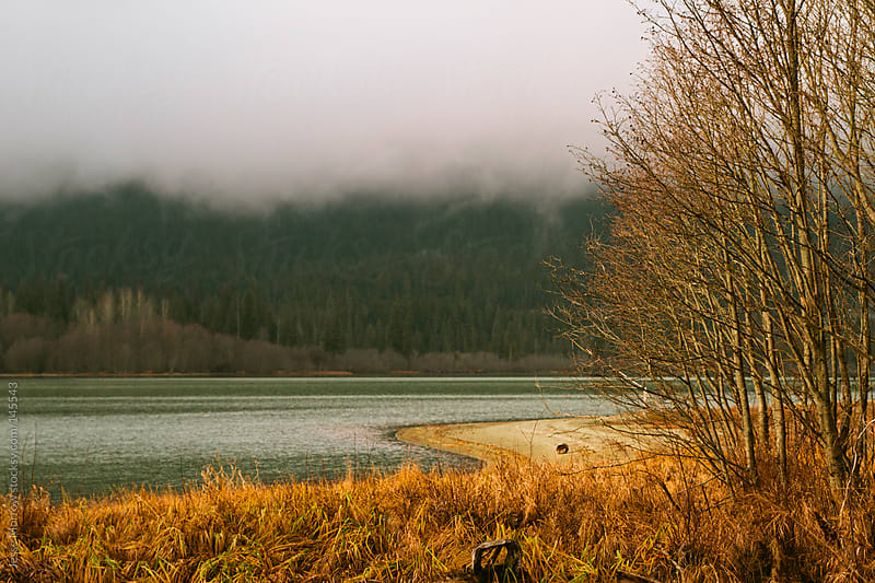 Fog and sun battle for the pond by Jesse Morrow for Stocksy United
