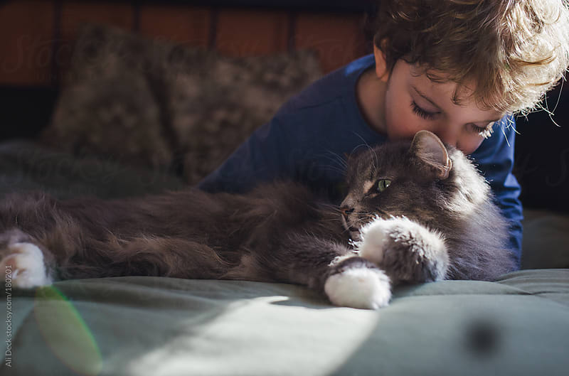 A Boy and his Cat by Ali Deck for Stocksy United