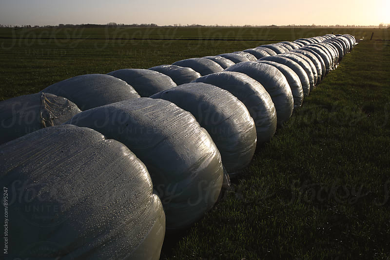 Bales of cow fodder wrapped in plastic by Marcel for Stocksy United