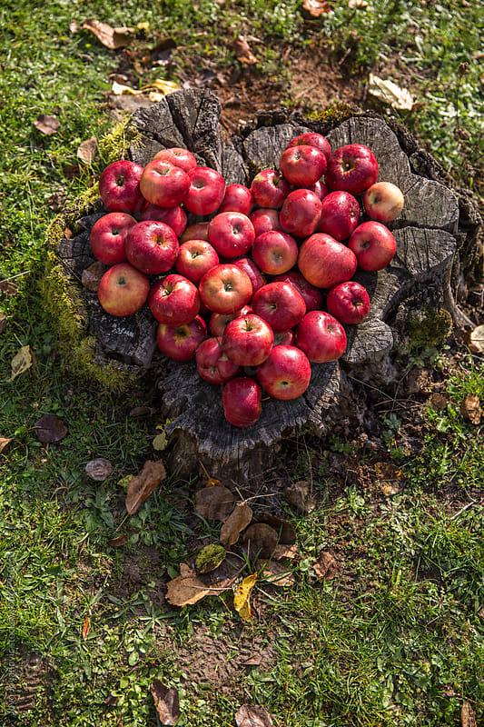 Organic apples  by Jovo Jovanovic for Stocksy United