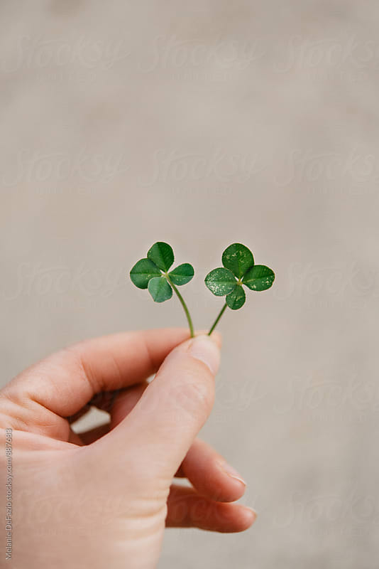 Four leaf clover by Melanie DeFazio for Stocksy United