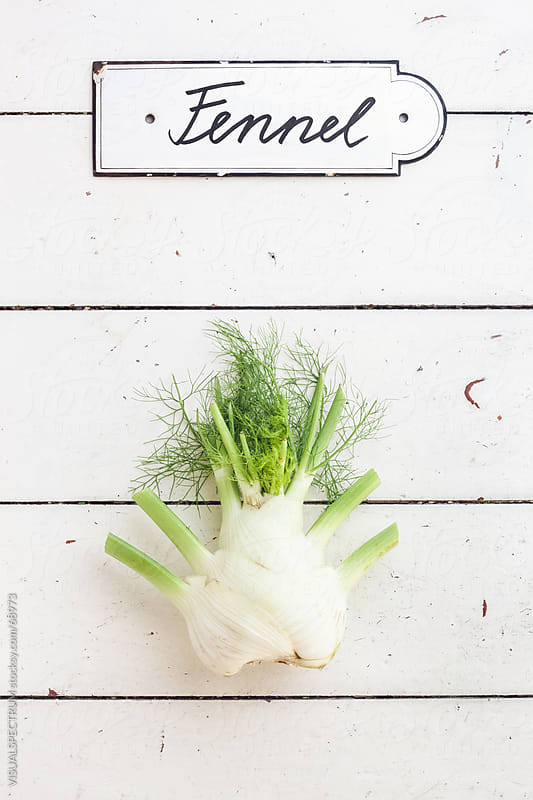 Fennel by VISUALSPECTRUM for Stocksy United