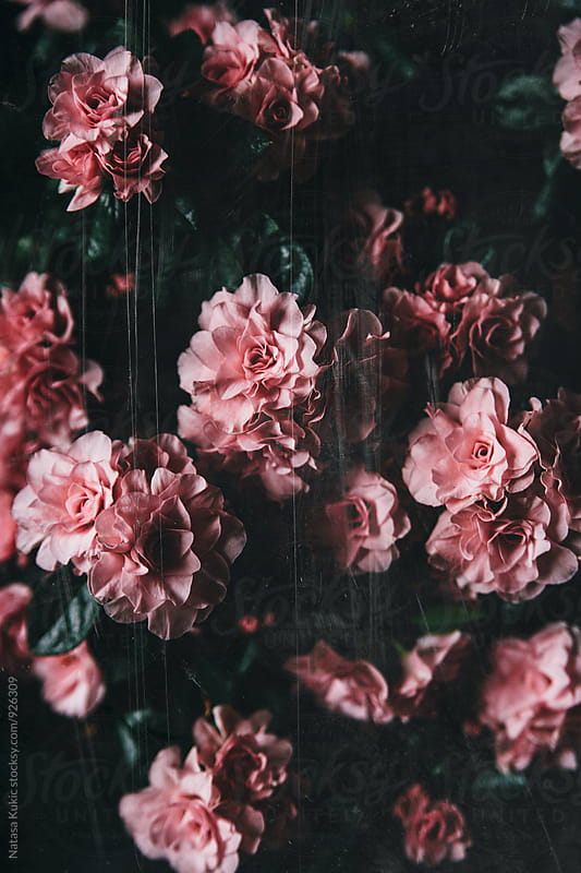 Vintage flowery backgrounds by Natasa Kukic for Stocksy United