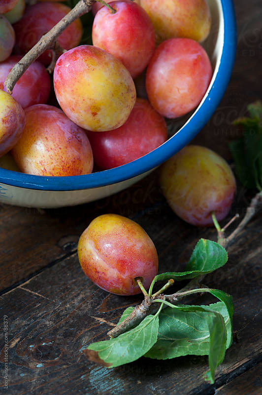 harvested plums in an enamelled container by Lee Avison for Stocksy United