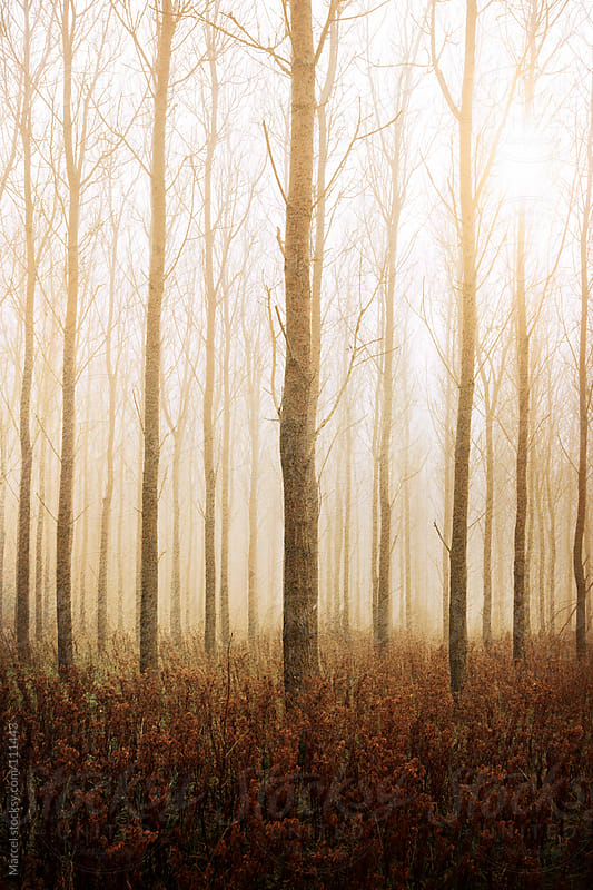 Moody foggy forest by Marcel for Stocksy United