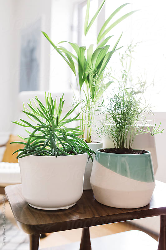 Collection of contemporary planters and greenery in bright home by Carey Shaw for Stocksy United