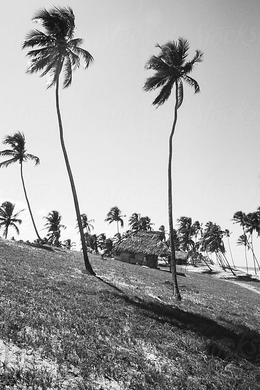 Palm trees and small hut on beach, Arembepe Village, near Salvador, Bahia, Brazil by Paul Edmondson for Stocksy United