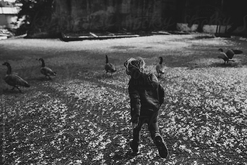 Young adventurous boy chasing geese in winter by Rob and Julia Campbell for Stocksy United