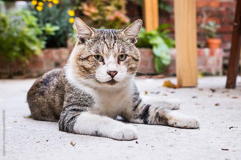 White and gray cat lying on floor of garden by Lawren Lu for Stocksy United