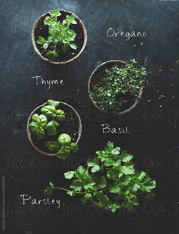 Herbs by Melanie DeFazio for Stocksy United