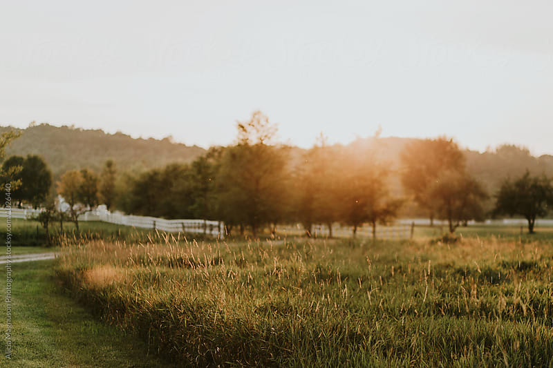 Farmland Field at Sunset by Alicia Magnuson Photography for Stocksy United