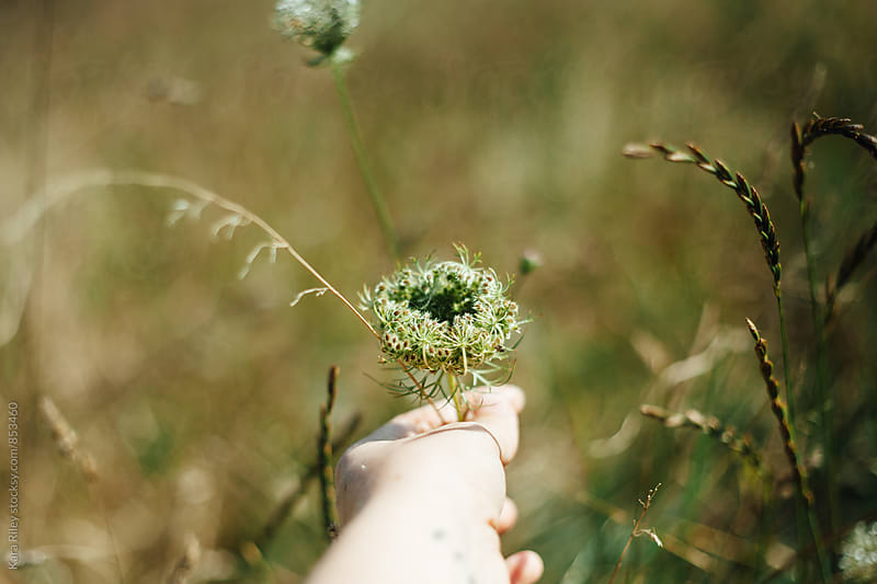 Grasping Wildflowers by Kara Riley for Stocksy United