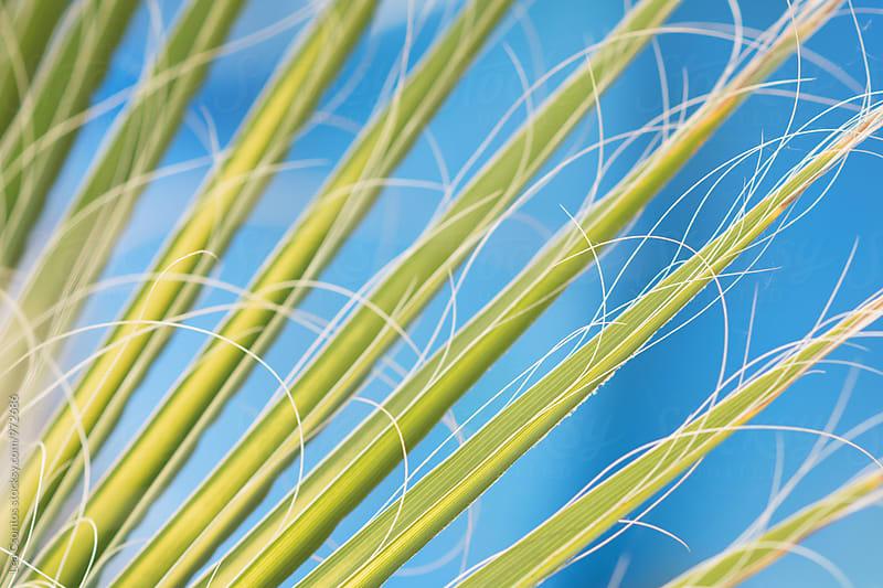 Palm leaf details by Lea Csontos for Stocksy United